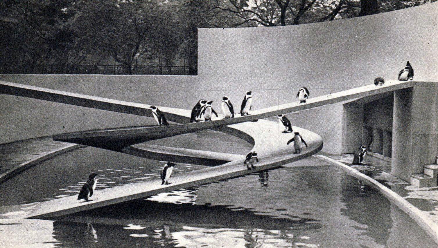Lubetkin-Pinguino-Zoo-Londres-Rampa-1.jp